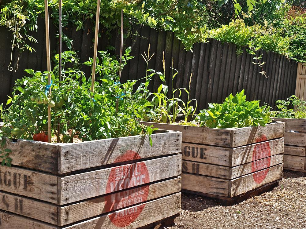 Veggie garden love show tell for Vegetable patch design ideas